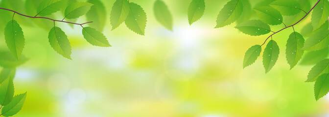 FototapetaFresh green leaves background, vector illustration
