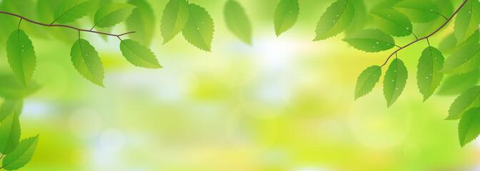 Panel Szklany Podświetlane Do przedpokoju Fresh green leaves background, vector illustration