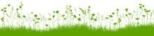 Sommerwiese Vektor Hintergund