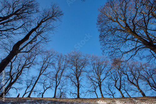 abstract park and trees Poster