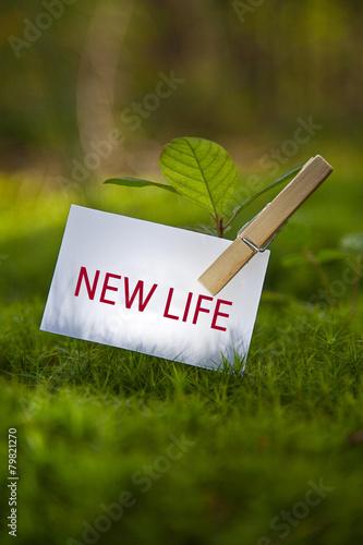 Fotografija  New Life