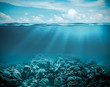 canvas print picture - Sea or ocean underwater deep nature background
