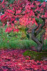 Panel Szklany Podświetlane Do pokoju Herbst im Park
