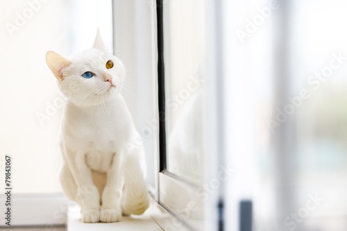 Fotografie, Obraz  Белый кот