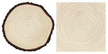 Colour Saw Cut Pine Tree Trunk And Tree Rings Background