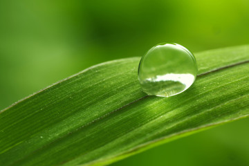 Fototapeta Woda Krople leaf with rain droplets - Stock Image