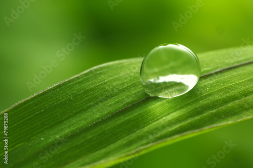 leaf with rain droplets - Stock Image - 79875288
