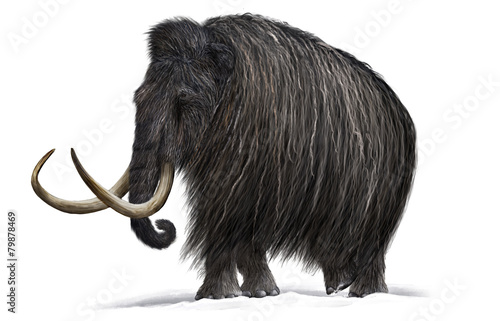 Fotografie, Tablou  Mammoth