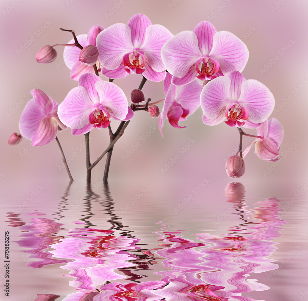 Fototapety, obrazy: Pink orchids flowers background design