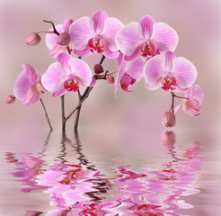 Panel Szklany Storczyki Pink orchids flowers background design
