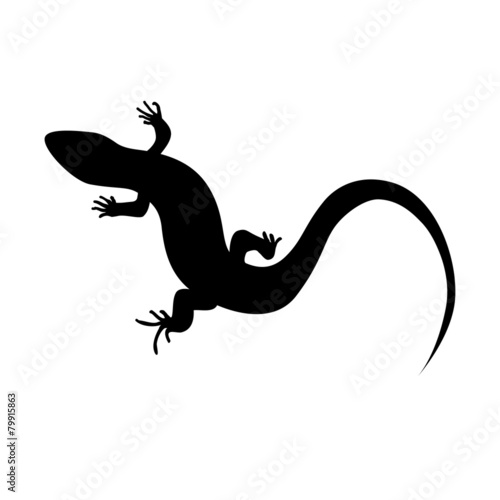 Photo  Beautiful  monochrome lizard, lizard silhouette. Vector illustra