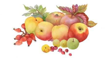 Obraz Painted autumn fruits and leaves on white background