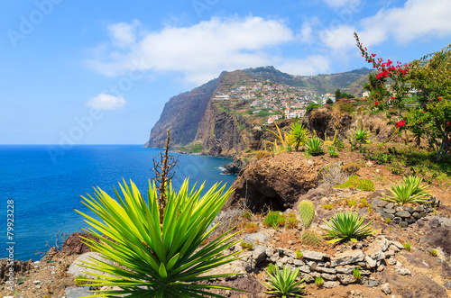 Valokuva  Tropical plants on coast of Madeira island in summer, Portugal