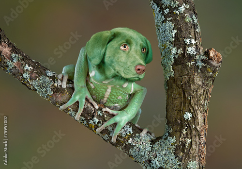Photo sur Toile Grenouille Frog Dog