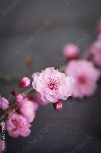 Fotografie, Obraz  Květiny zen