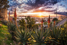 Colorful Sunset Through Aloe Plants Flower