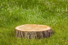 Tree Stump On  Grass