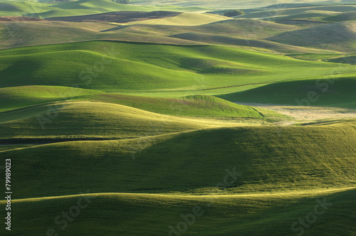 USA, Washington State, aerial view to fields and green hills of Palouse #79989023