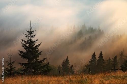 gorska-mgla-i-drzewa-iglaste
