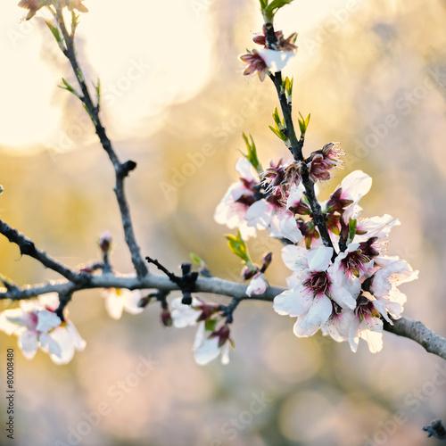 piekne-biale-kwiaty-i-zielone-kwitnace-paki