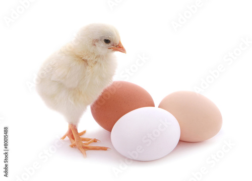 Fototapeta Cute chick and eggs isolated on white background.
