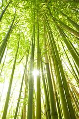 Fototapeta hohe Bambusstämme