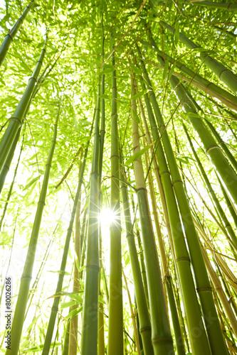 In de dag Bamboo hohe Bambusstämme