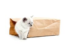 Cute Kitten In A Bag