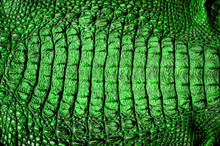 Green Crocodile Alligator Leat...