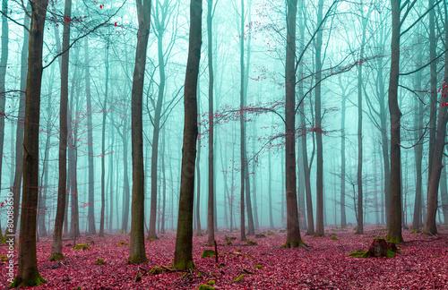 magiczny-las-w-kolorze-czerwonym-i-turkusowym