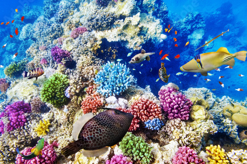 Poster Sous-marin Underwater world with corals and tropical fish.