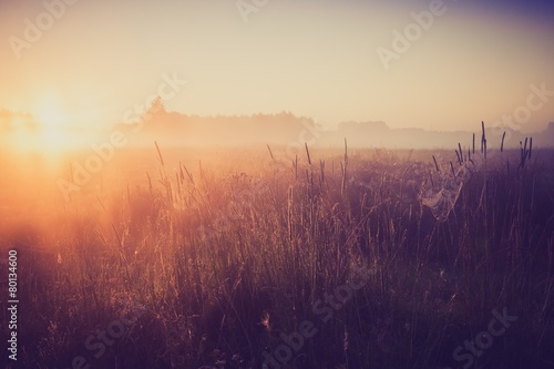 Fotomural  Vintage photo of morning foggy meadow in summer. Rural landscape