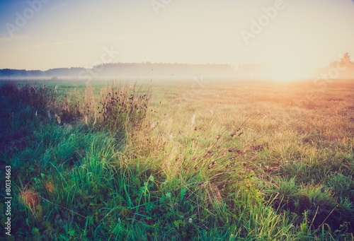 Poster Beige Vintage photo of morning foggy meadow in summer. Rural landscape