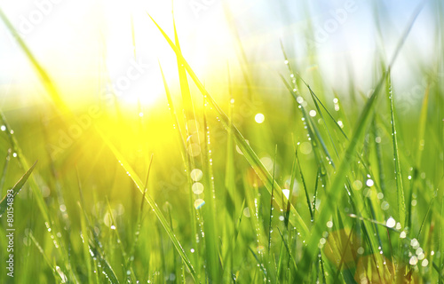 Foto op Plexiglas Gras Grass. Fresh green spring grass with dew drops closeup