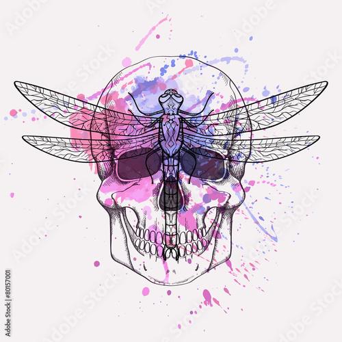 Foto auf AluDibond Aquarell Schädel Vector grunge illustration of human skull and dragonfly with watercolor splash
