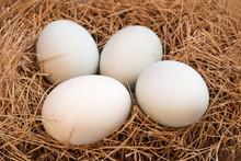 White Eggs At Hay Nest
