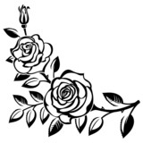 Branch of roses