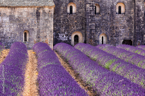 Poster Prune Blooming field of Lavender in front of Senanque, France