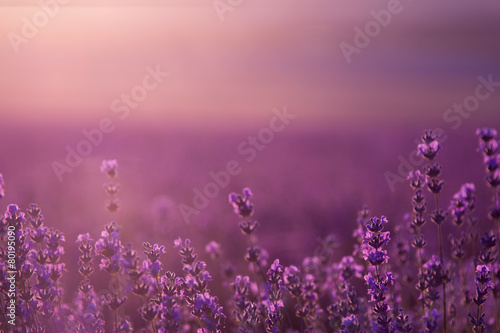 blurred summer background of wild grass and lavender flowers #80195090