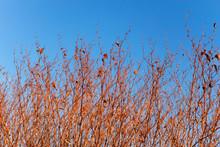 Dried Grassy Plants