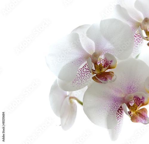 orchidea-kwiaty-odizolowywajacy-na-bialym-tle