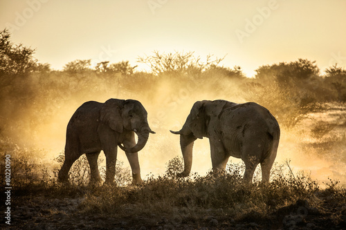 Canvas Prints South Africa Elephant fight