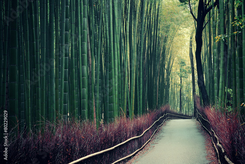 Poster Kyoto Bamboo Grove