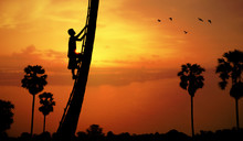 Man Climbing A Sugar Palm Tree To Collect Sap