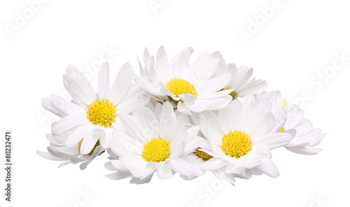 Spoed Foto op Canvas Madeliefjes pile of chamomile flower isolated on white background