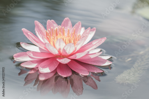 Photo Stands Water lilies Pink water lily in pond