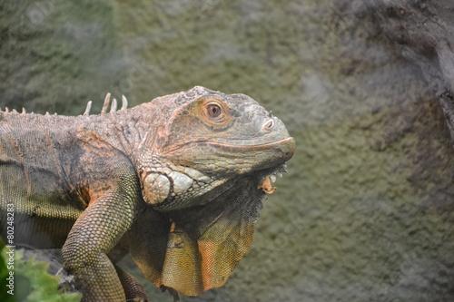 Photo Stands Chameleon kameleon