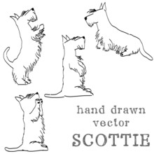 Hand Sketched Scottish Terrier...