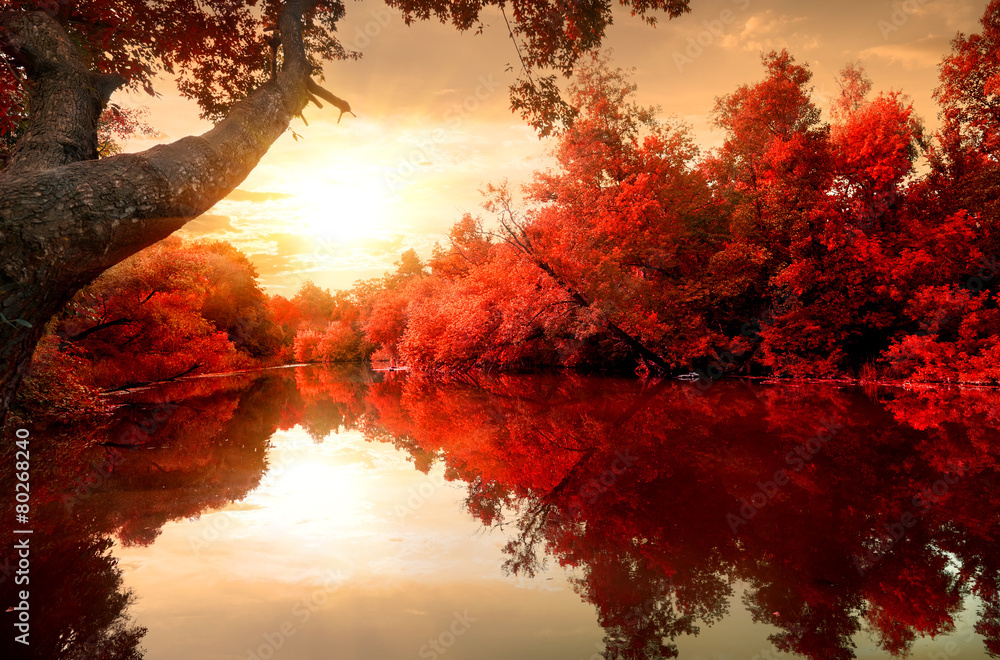 Fototapety, obrazy: Red autumn on river