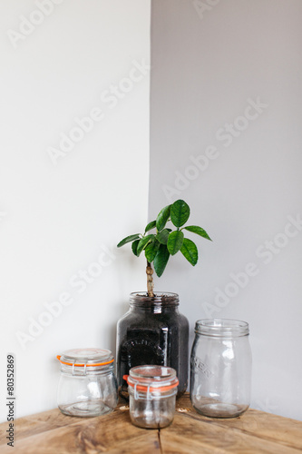 Venus fly trap contained in a kilner jar - Buy this stock photo and